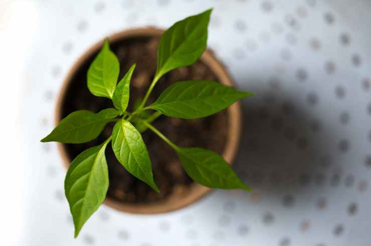 young-plant-green-pot-615304.jpeg